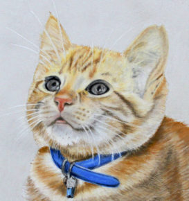 Cat pet portrait hand drawn at cato9tales