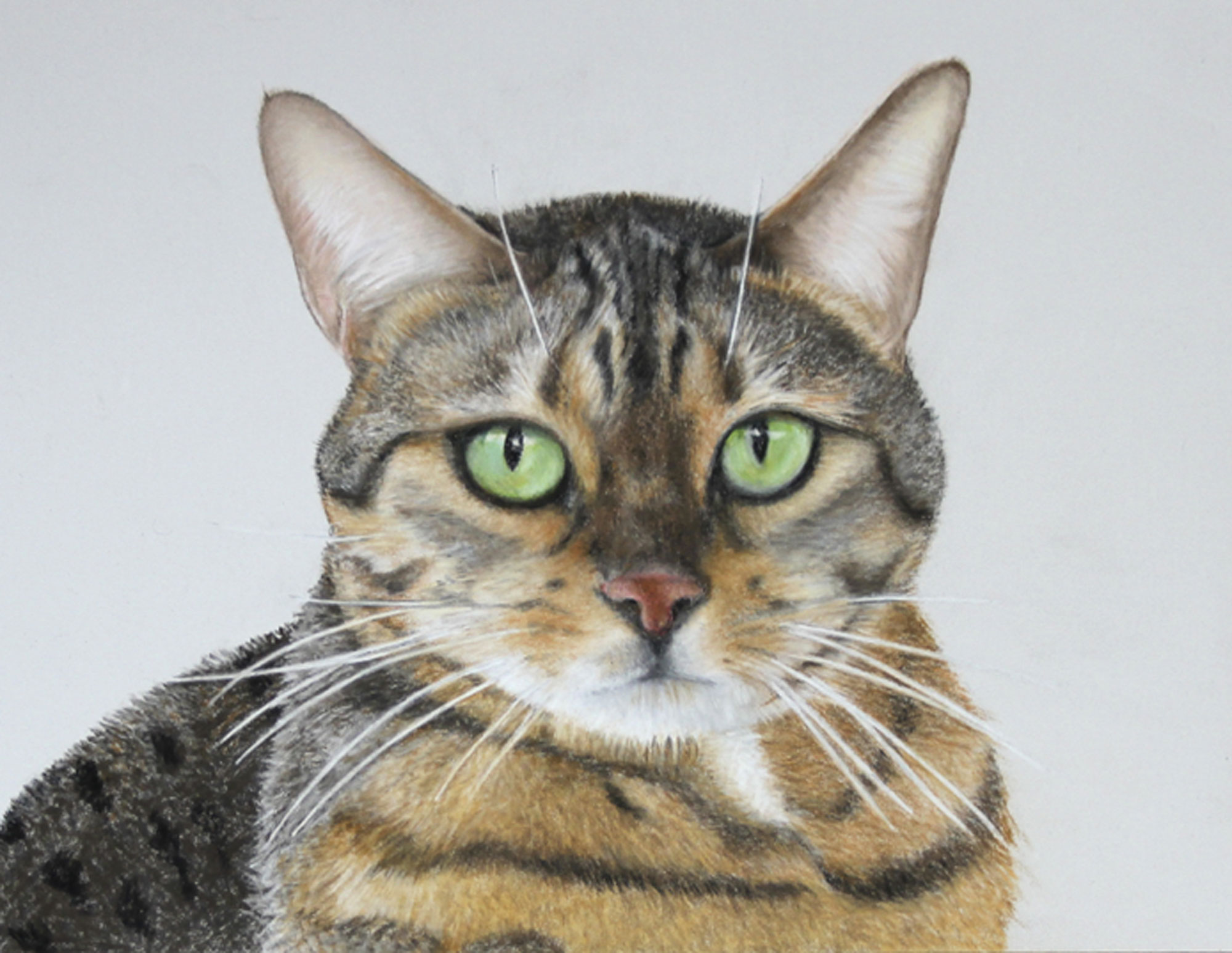 Cat pet portrait, tabby cat hand drawn at cato9tales