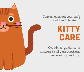 Is your cat feline ok? All your questions answers in our Kitty Care feature