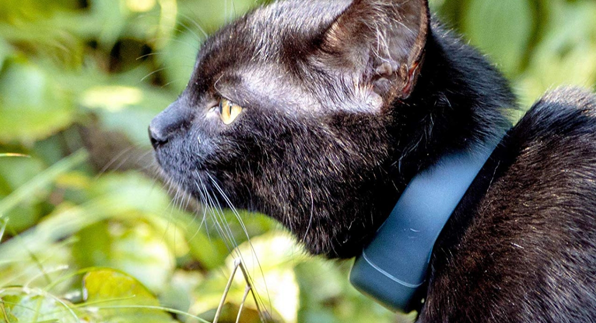 Rinpoche reviews the cat GPS Tracker