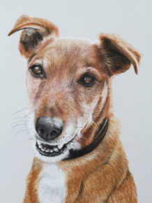 Custom made personal pet portraits by cato9tales