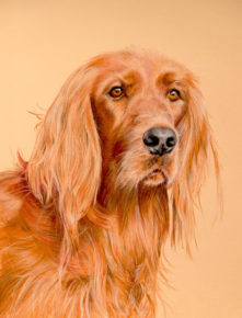 personal pet portraits by cato9tales