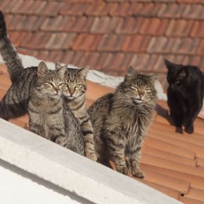 Jamuary: Cats congregate on rooftops and jam together