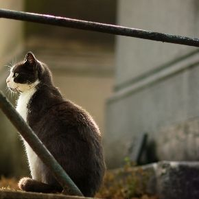 Cat in a graveyard remember loved ones lost