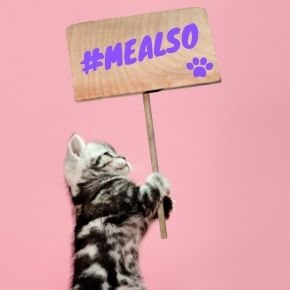 Cats protesting in the #MeAlso movement