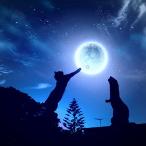 Cat pawing at the moon at nighttime