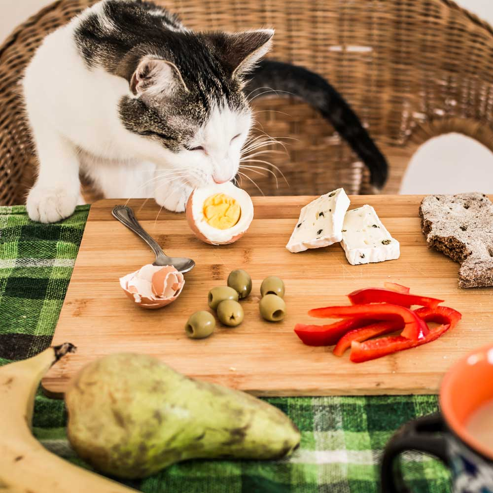 Can Cats Eat Eggs? Plus 18 Foods Cats Can Eat.