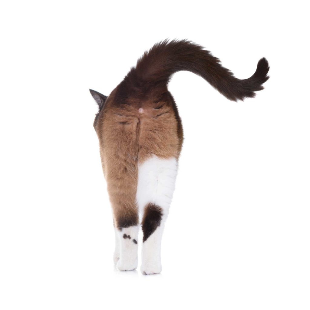 When you see a swishing cat tail this typically means your cat is observing something.