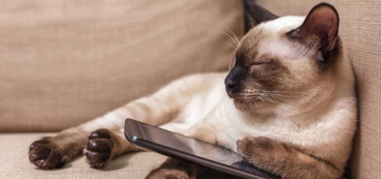 A Cat using a phone, but is this really how cats communicate?