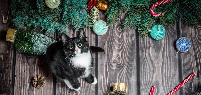 Twelve Days of Catmas.