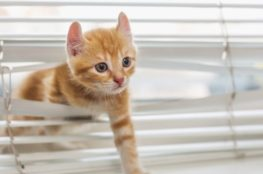The Misdemeanours of Mittens the Kitten