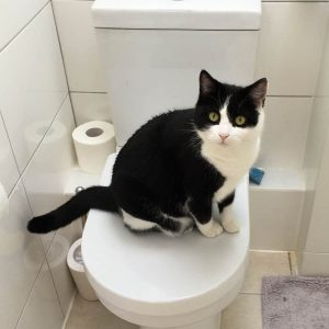 Rinpoche the cat contemplates life on the loo. Cato9Tales